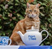 Blue Cross Tea Party raises thousands for needy pets...