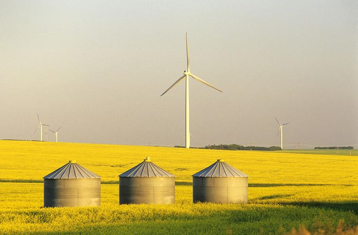 Grain Bins And Wind Turbines In Canola by Dave Reede - Grain Bins And Wind Turbines In Canola Photograph - Grain Bins And Wind Turbines In Canola Fine Art Prints and Posters for Sale
