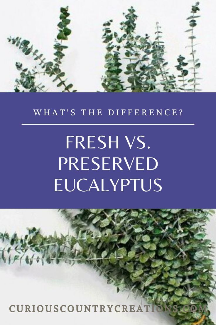 What Is The Difference Between Fresh Dried And Preserved Eucalyptus In 2020 Dried Eucalyptus Dry Plants Eucalyptus