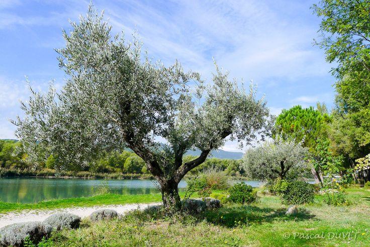 VOLOA28 - Sur les bords de la Durance - Village de Volonne - Alpes de Haute Provence 04