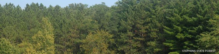Stephens State Forest is located in south-central Iowa and is divided into seven unit totaling over 15,500 acres.