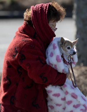 Subzero wind chills have been widely registered, & Aspros, who has offices in White Plains & Pound Ridge, N.Y., says they are a big factor because wind strips heat from pets faster.  If you need to warm a shivering animal, a quick & easy way is to heat a towel in the dryer & wrap it around them.  Many animals will be comfortable if they're moving but get cold when they slow down, said Dr. Brian Collins of the small animal clinic at Cornell University College of Veterinary Medicine in Ithaca…