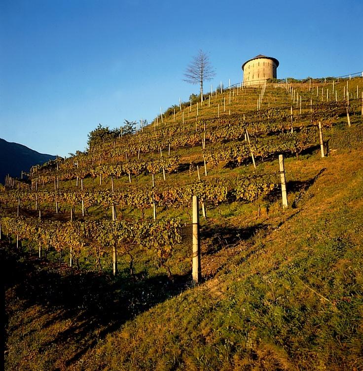 Camorino, land of vineyards.