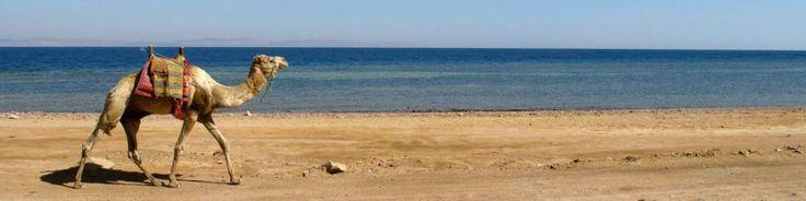 Rote Meer Mittlerer Osten | Mittlerer Osten Reiseführer