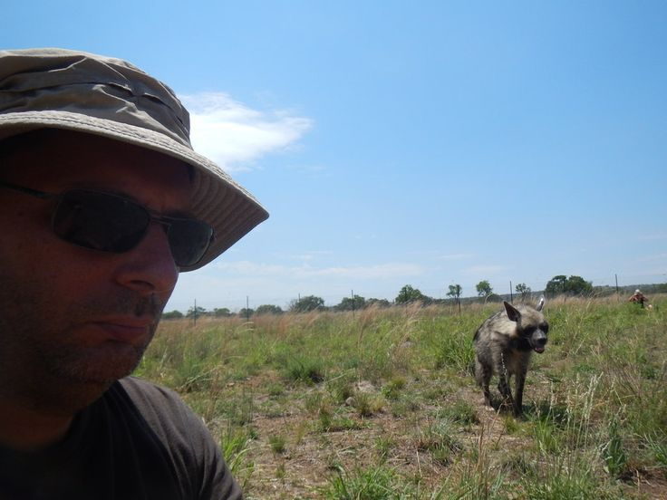 south africa animal striped hyena 2