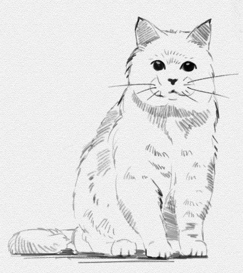 """Как нарисовать кошку карандашом - Сегодня мы будем рисовать животное, которое встречается нам с самого детства. Все мы любим сказку """"Кот в сапогах"""", мультфильмы, где героями выступают милые кошки и вообще все, что связано с эти забавными и добрыми животными.  Урок"""