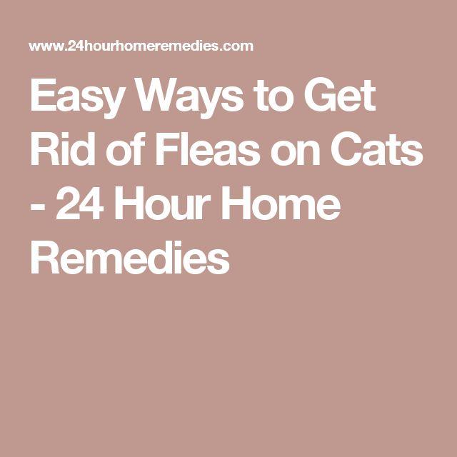 Best 25 Home Remedies Fleas Ideas On Pinterest Flea