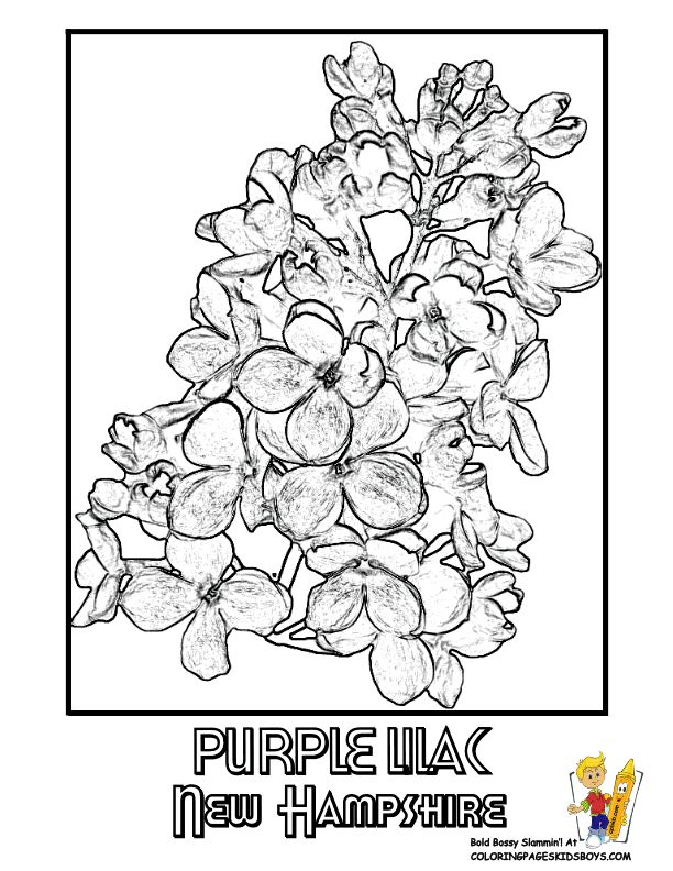251 best USA Coloring Pages images