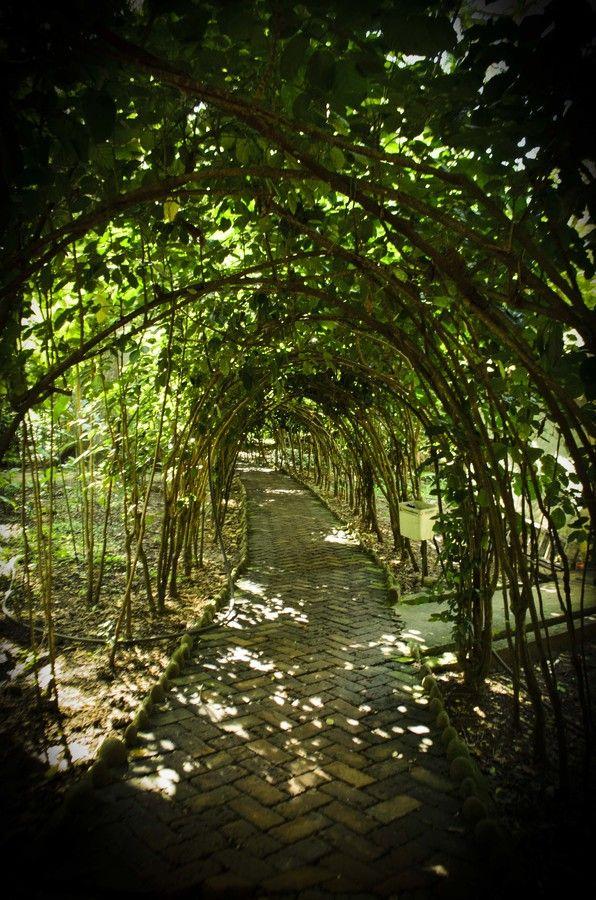 Tunel verde en el Parque El Gallineral San Gil Santander Colombia Green tunnel by Diego Agudelo on 500px