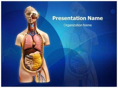 EditableMedicalTemplates.com presents state-of-the-art Organ #PowerPoint #template for medical professionals. Create great-looking medical PowerPoint presentations with our Organ medical PowerPoint theme. #Science #Education #Biology #Anatomy #Abdomen