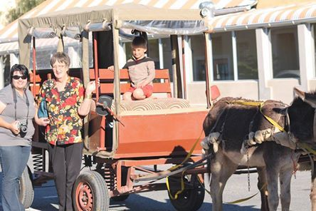 Donkey car rides Beaufort-West - guided tours