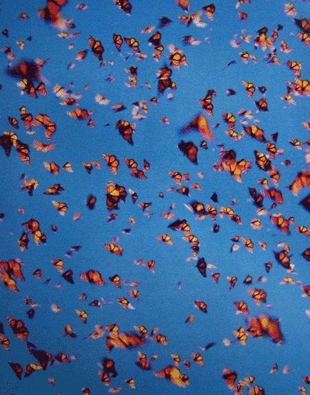 Making love in a field of butterflies