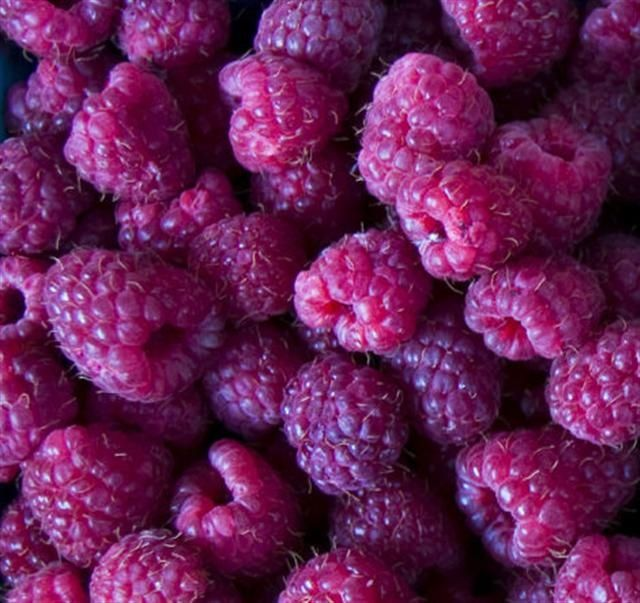 Wild Berries - Radiant Orchid color