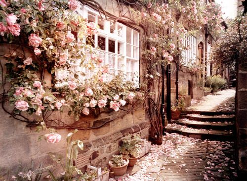 Roses at the window: Pink Flowers, Rose Gardens, Dreams, Climbing Rose, English Cottages, Beautiful Places, Romantic Gardens, Pink Rose, House