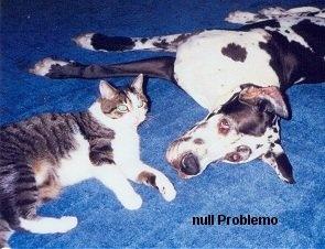 Null Problemo^^