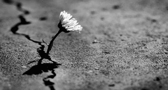 """""""É preciso explicar por que o mundo de hoje, que é horrível, é apenas um momento do longo desenvolvimento histórico e que a esperança sempre foi uma das forças dominantes das revoluções e das insurreições. E eu ainda sinto a esperança como minha concepção de futuro.""""  Jean-Paul Sartre, prefácio de """"Os condenados da terra"""", de Frantz Fanon, 1963."""