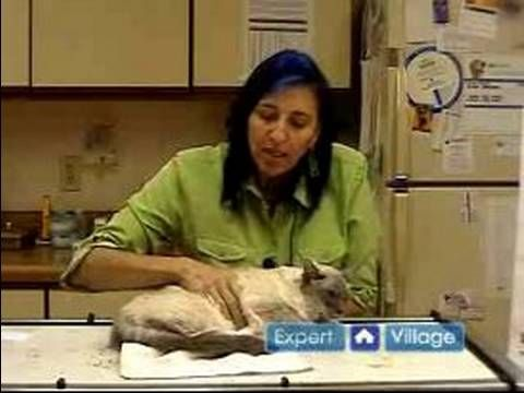 Emergency Cat Health Care : How to Perform CPR on a Cat