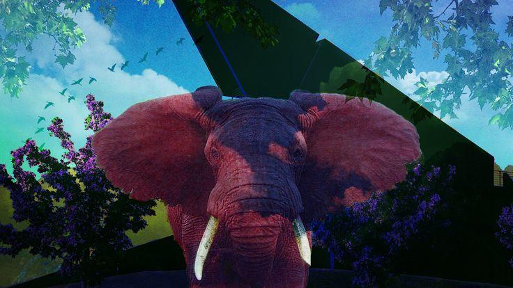idk, elephant