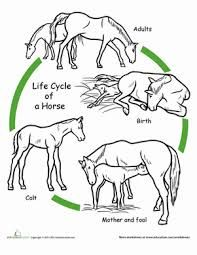 Image result for free worksheets life cycle of mammals