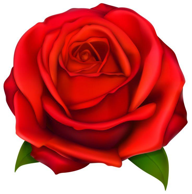 clip art red rose #7092