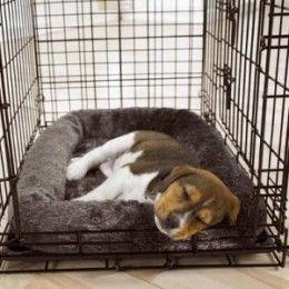 Crate Training Puppy Tips. Puppies love their crates. :)