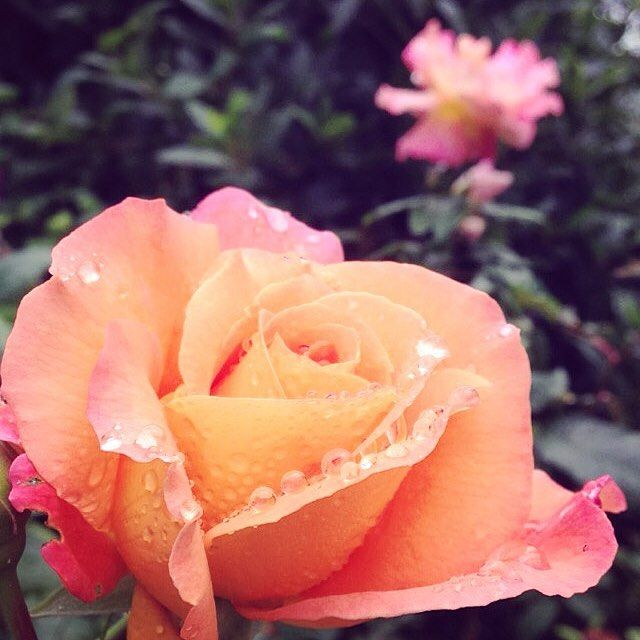 Mid week floral inspiration 🌺🌷🌸