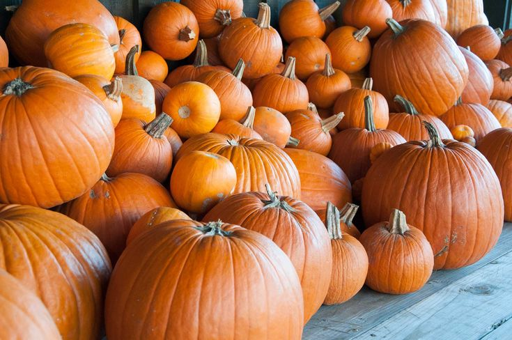 When and How to Harvest Pumpkins   P. Allen Smith