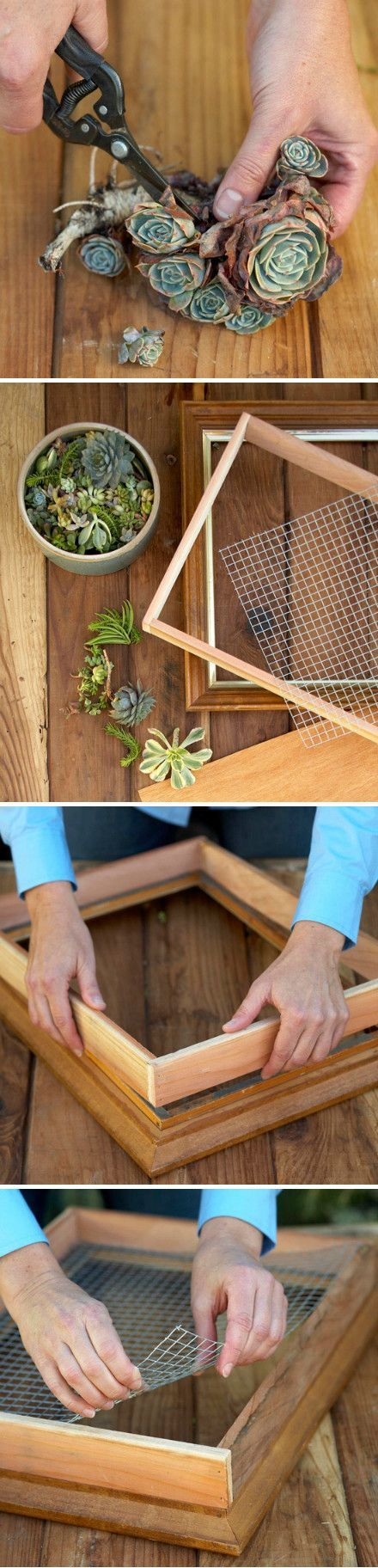 Do It Yourself Projects : DIY | Make a Living Succulent...