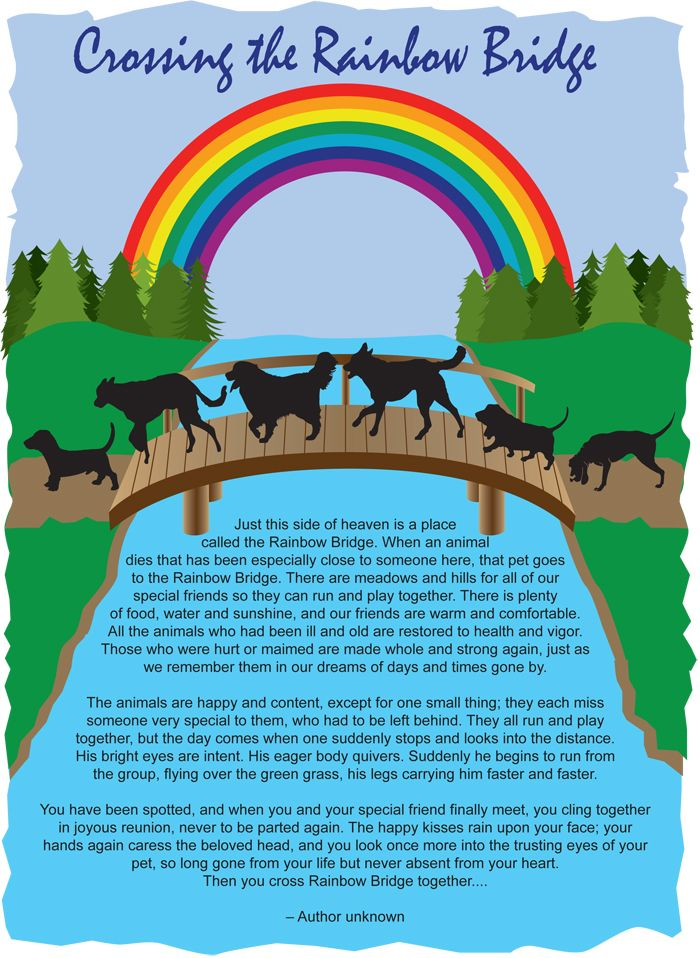 crossing the rainbow bridge poem - Google Search