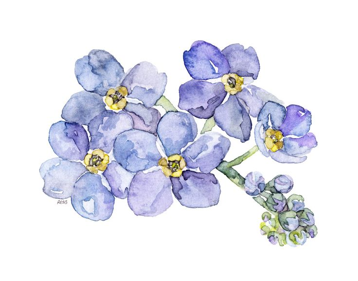 26 best images about Forget me nots on Pinterest