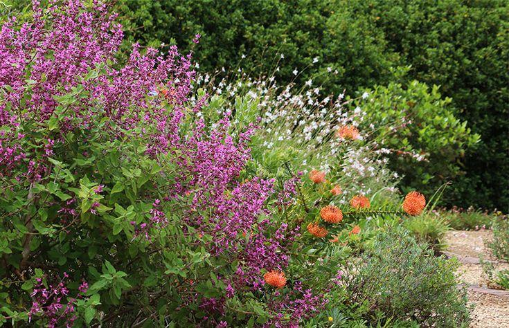Garden Visit: A Secluded Cape Dutch Estate in Cape Town: Gardenista