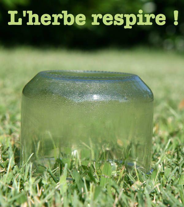 Respiration des plantes : une expérience simple - Let's kid learn about grass respiration !
