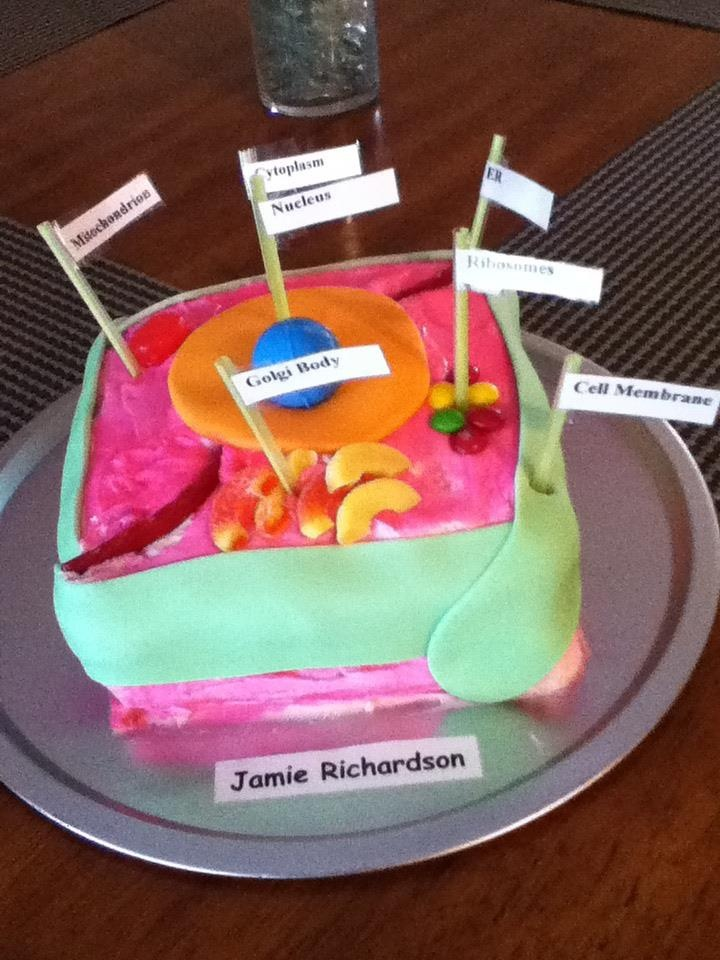 animal cell cake project animal cell cake for s 7th grade science project 1309