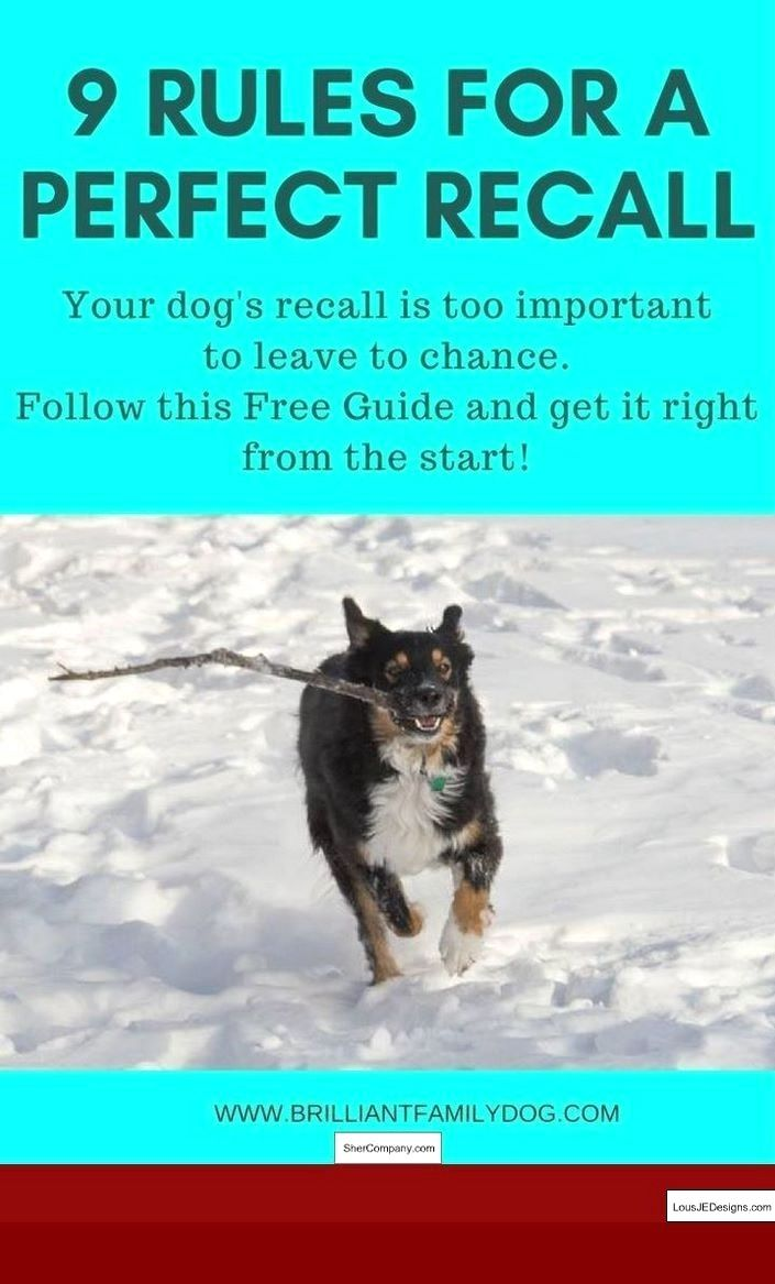 Dog Training For Barking At Strangers And Pics Of How To Train A
