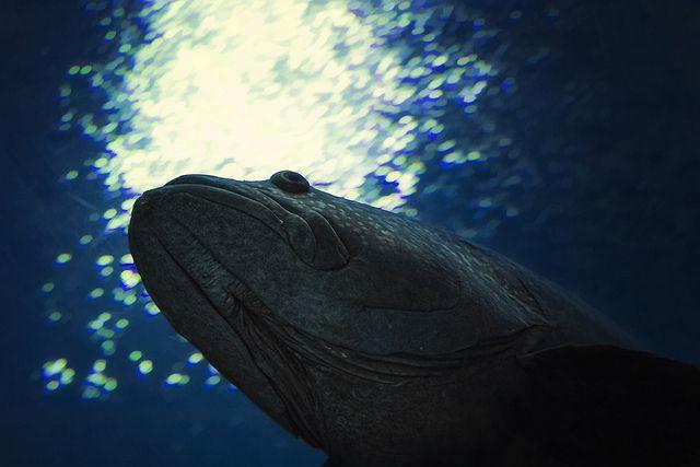 추운겨울, 물고기는 물속에서 어떻게 살까?