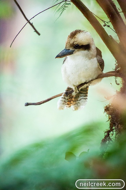 Kookaburra sits in the ole gum tree, merry, merry king of the bush is he.... (my great grandmother used to sing this to me)