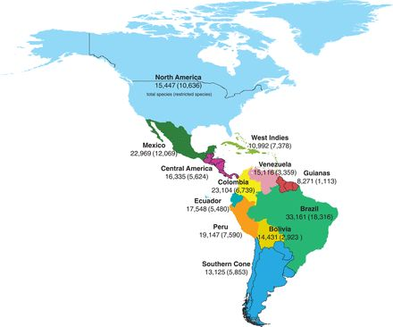 An integrated assessment of the vascular plant species of the Americas | Science
