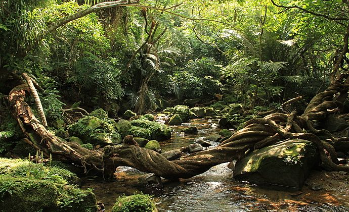Circuit Japon : Le Japon subtropical - Les îles d'Okinawa   Evaneos