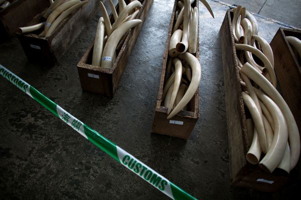 The Ivory Trade is Out Of Control, and the China Government Needs to Do More to Stop It ! Around 100 African elephants are being slaughtered daily just so people can carve ridiculous ornaments from their tusks