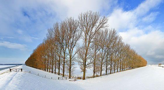 In deze compositie is gebruik gemaakt van lijnperspectief naar twee kanten. Ook zie je kleur tegen kleur contrast. De blauwe lucht en de bruin/oranje kleur van de bomen.
