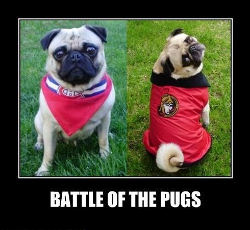 Pug Hockey Fans. Hubby is a Sens fan & I'm a Habs fan. In our house it's the Montreal Canadiens vs the Ottawa Senators all the time! LOL