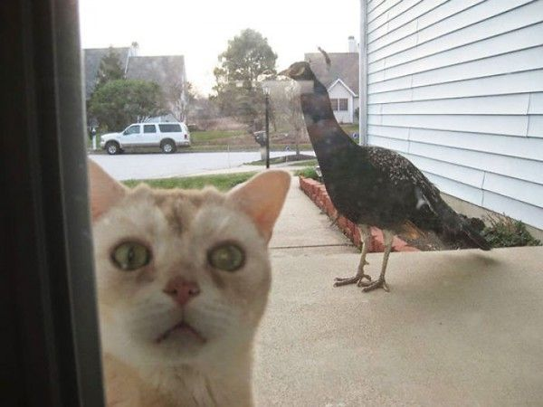 14 photos hilarantes de chats enfermés dehors - Page 2 sur 2 - Animalaxy