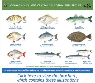 30 best california best surf fishing spots images on for Best places to fish in california