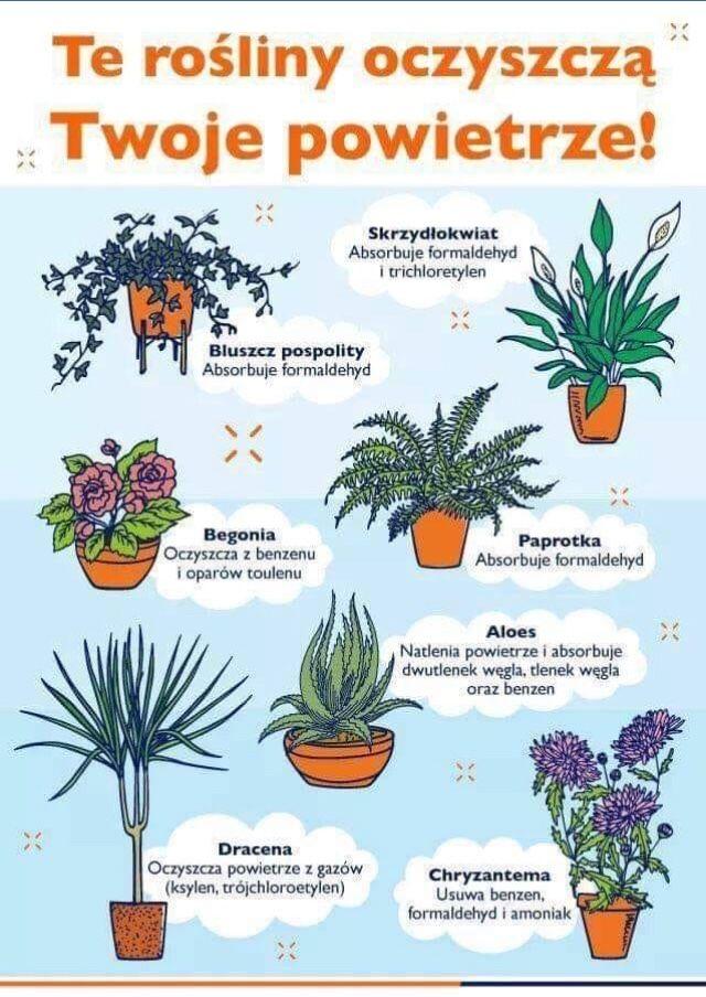 Rosliny Oczyszczajace Powietrze Growing Plants Indoors Plants Outdoor Gardens Design