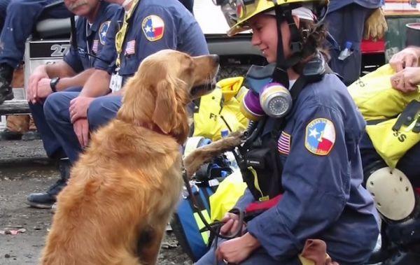 Les adieux à Bretagne le dernier chien-sauveteur du 11 septembre 2001 [video] - http://www.2tout2rien.fr/les-adieux-a-bretagne-le-dernier-chien-sauveteur-du-11-septembre-2001-video/