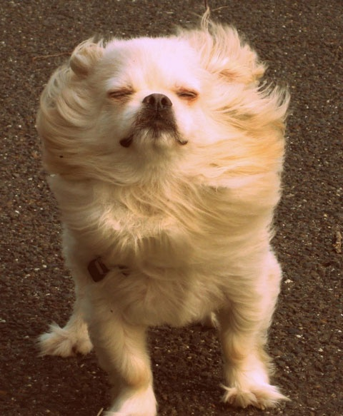 nothing like the wind in your hair