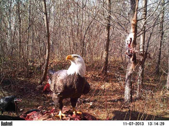 50 Best TRAIL CAM pics on Thrill On!