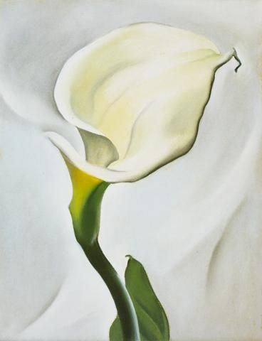 Calla Lily Turned Away Canvas Print Rolled • 23x30 inches