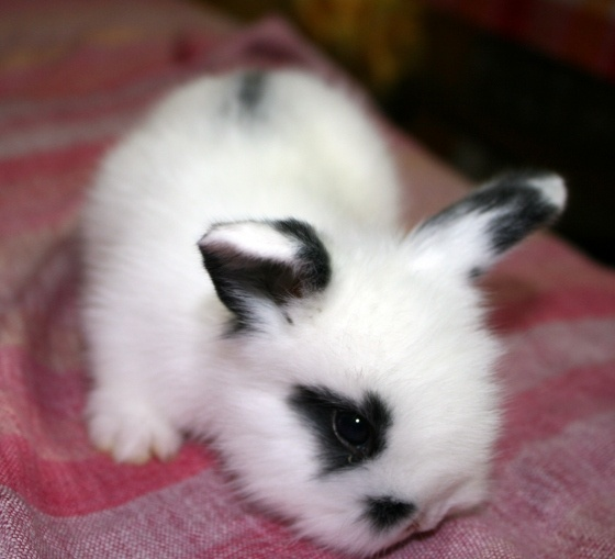 black and white bunny | Cats and other cute creatures ...