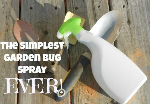 Homemade Bug Spray For Gardens - requires 3 ingredients only, works like a charm! #gardening